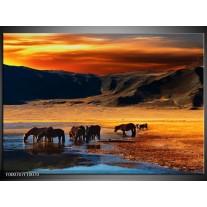 Foto canvas schilderij Paarden | Oranje, Rood, Blauw