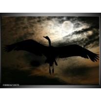 Foto canvas schilderij Vogel | Zwart, Wit, Bruin