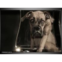 Foto canvas schilderij Hond | Grijs, Zwart, Wit