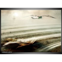 Foto canvas schilderij Vogels   Wit, Grijs,