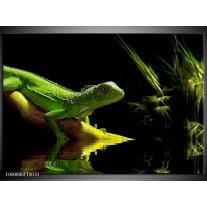 Foto canvas schilderij Leguaan | Groen, Zwart, Geel