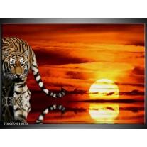 Foto canvas schilderij Tijger | Bruin, Oranje, Rood