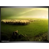Foto canvas schilderij Schaap | Groen, Geel, Wit
