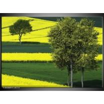 Foto canvas schilderij Boom | Groen, Geel, Wit