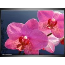 Foto canvas schilderij Orchidee | Paars, Wit, Rood