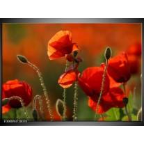 Foto canvas schilderij Klaproos   Rood, Groen