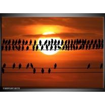 Foto canvas schilderij Vogels | Zwart, Geel, Oranje