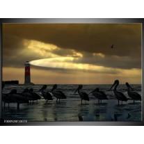Foto canvas schilderij Vogels | Geel, Zwart, Wit