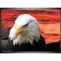 Foto canvas schilderij Vogel | Wit, Rood, Zwart