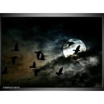 Foto canvas schilderij Vogels | Zwart, Grijs, Wit