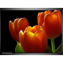 Foto canvas schilderij Tulpen | Rood, Geel, Oranje