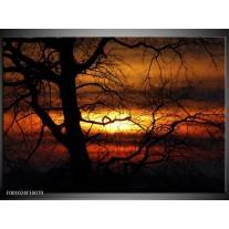 Foto canvas schilderij Boom | Rood, Oranje, Zwart
