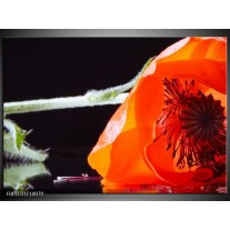 Foto canvas schilderij Bloem | Rood, Wit, Zwart