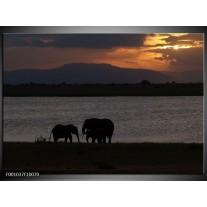 Foto canvas schilderij Olifant | Zwart, Grijs
