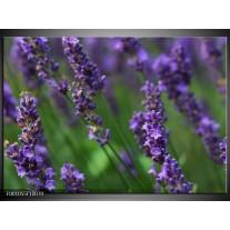 Foto canvas schilderij Lavendel | Blauw, Zwart, Groen