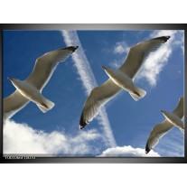 Foto canvas schilderij Vogels | Blauw, Zwart