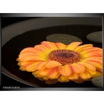 Foto canvas schilderij Bloem   Zwart, Oranje, Geel