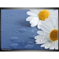 Foto canvas schilderij Bloem | Wit, Blauw, Geel