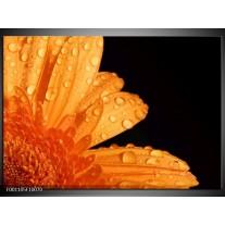 Foto canvas schilderij Bloem | Zwart, Oranje