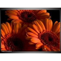 Foto canvas schilderij Bloem | Oranje, Zwart, Rood