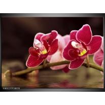 Foto canvas schilderij Orchidee | Zwart, Rood