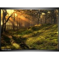 Foto canvas schilderij Natuur | Geel, Groen