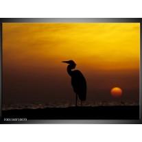 Foto canvas schilderij Vogels | Zwart, Geel