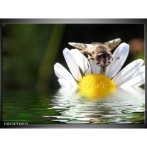 Foto canvas schilderij Natuur | Geel, Wit, Grijs