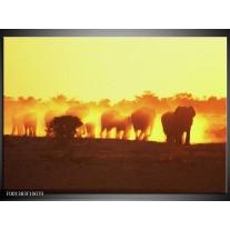Foto canvas schilderij Olifant   Geel, Oranje, Bruin