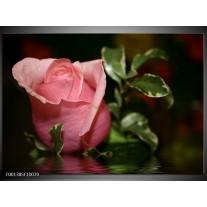 Foto canvas schilderij Roos | Rood, Groen, Zwart