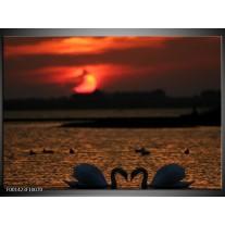 Glas schilderij Zwanen | Rood, Zwart