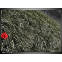 Glas schilderij Gras | Grijs, Rood
