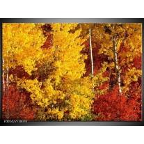Foto canvas schilderij Herfst | Geel, Oranje