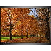 Glas schilderij Bomen | Geel, Oranje
