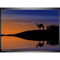 Glas schilderij Kameel | Zwart, Geel