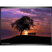 Glas schilderij Natuur | Paars, Oranje, Zwart