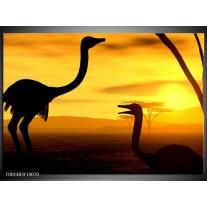Glas schilderij Vogel | Zwart, Geel