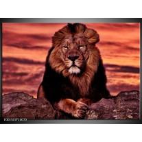 Glas schilderij Leeuw | Paars, Bruin, Zwart