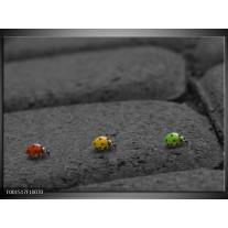 Glas schilderij Natuur | Grijs, Geel, Rood