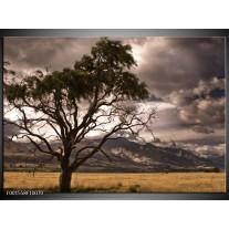 Foto canvas schilderij Natuur | Wit, Zwart, Grijs