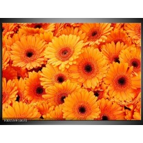 Glas schilderij Bloemen | Oranje, Zwart