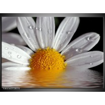 Foto canvas schilderij Bloem | Geel, Wit