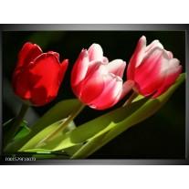 Foto canvas schilderij Tulpen | Rood, Wit, Groen