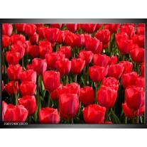 Glas schilderij Tulpen   Rood, Groen, Grijs