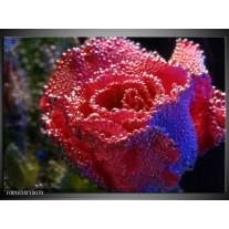 Glas schilderij Roos | Rood, Blauw, Wit