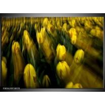 Foto canvas schilderij Tulpen | Geel, Groen