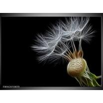 Foto canvas schilderij Natuur | Zwart, Wit, Groen