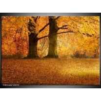 Glas schilderij Bomen | Geel, Groen, Bruin