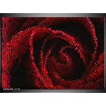 Glas schilderij Roos | Rood, Zwart