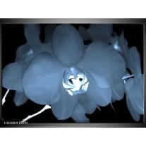 Glas schilderij Orchidee | Blauw, Wit